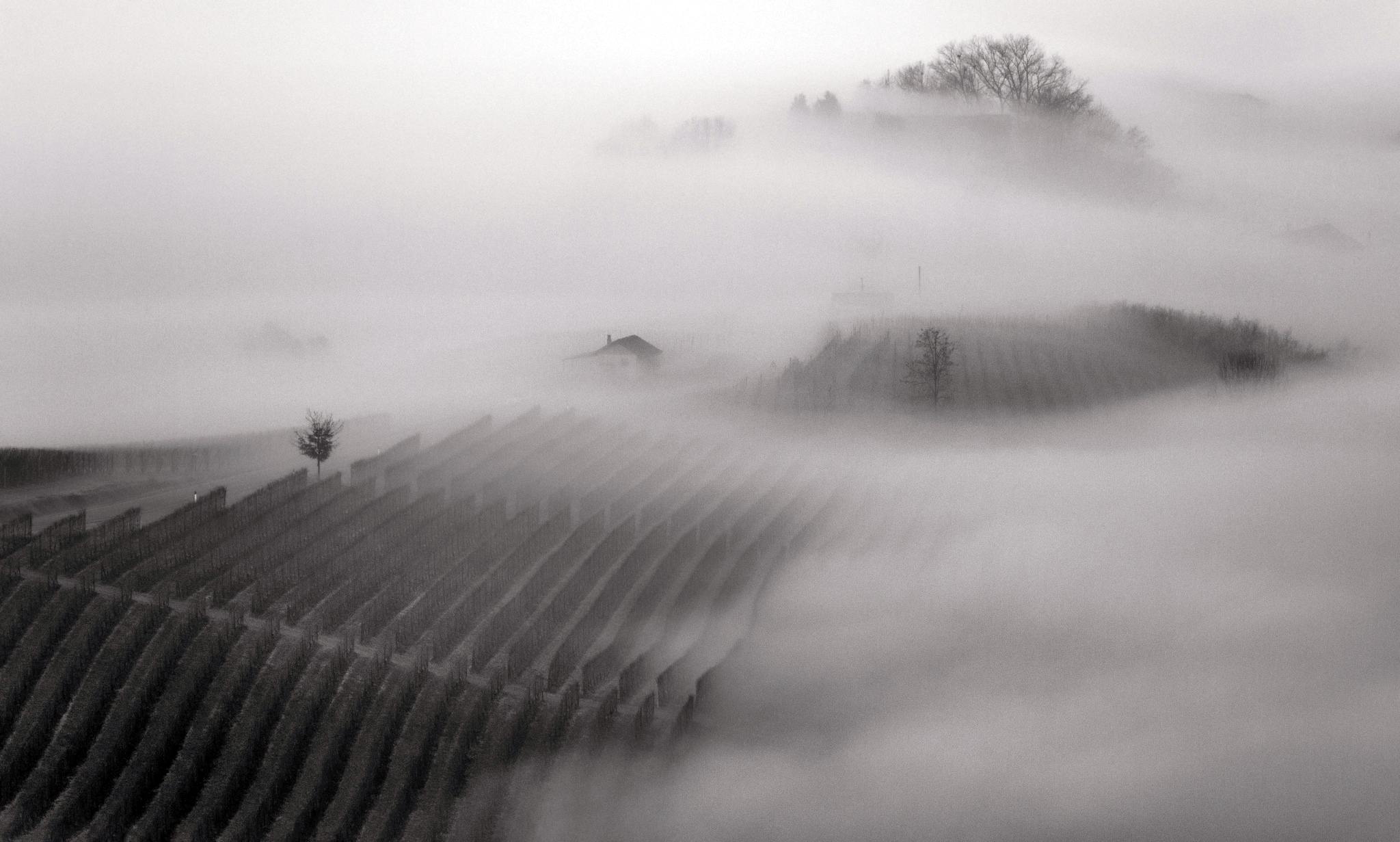 langhe fog